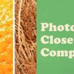 photo fun competition